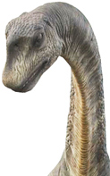 The majestic Camarasaurus