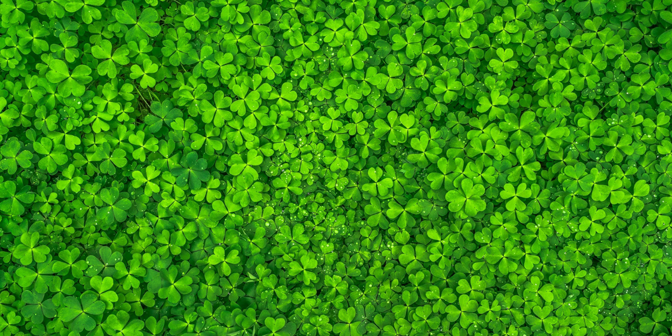 Ways You Can Celebrate St Patrick's Day